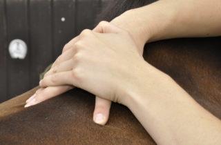 Massage beim Pferd